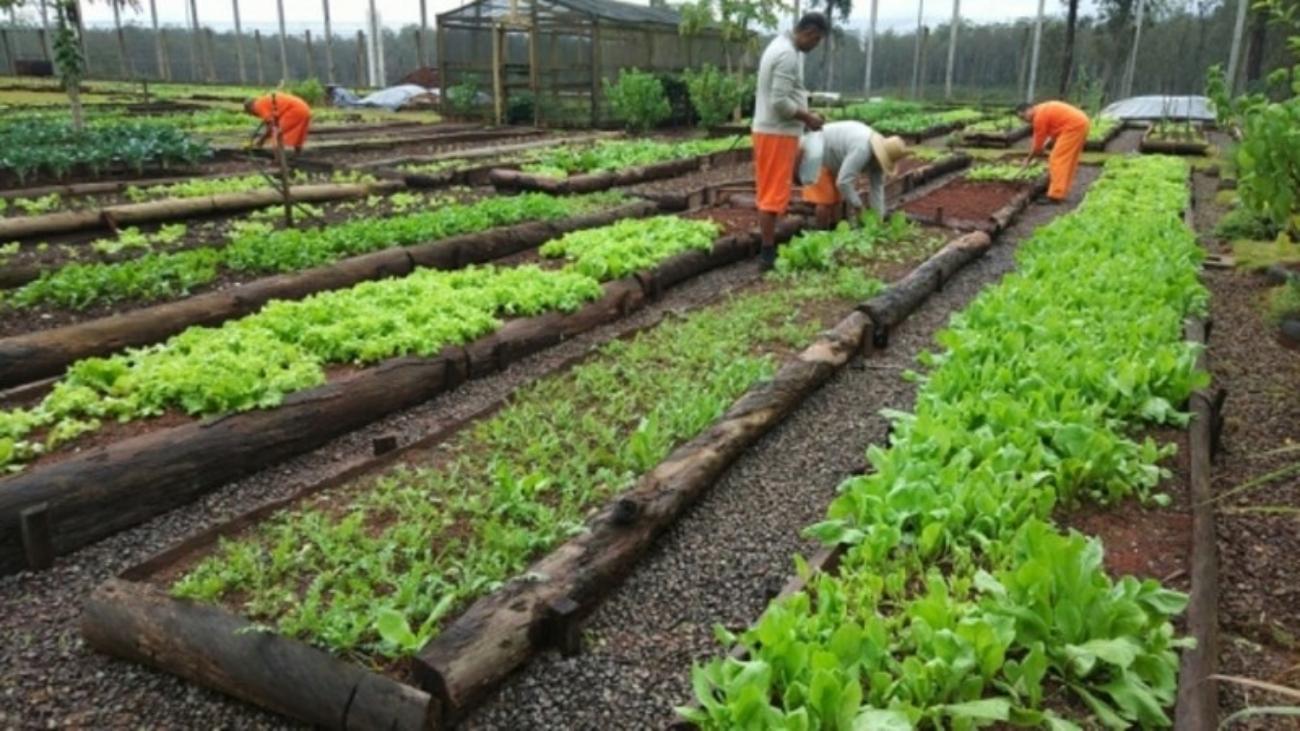 Presos trabalham na horta do complexo da Pecan - Foto: Seapen/Susepe divulgação